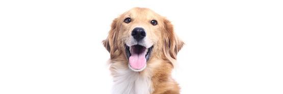 Karmy i przysmaki dla psów